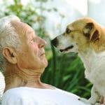 pet trust